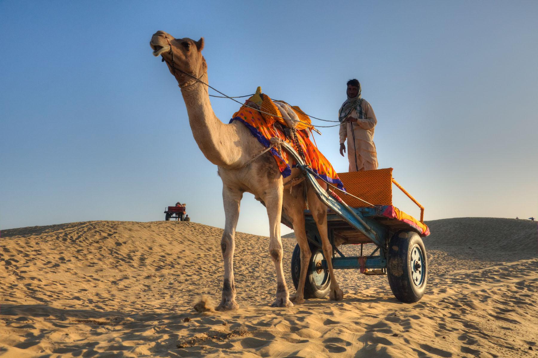 Camel riding on sand dunes in Jaisalmer