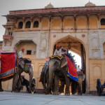 Rajasthan-elephants-sized