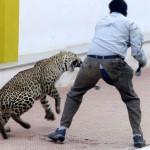 Leopard-2-sized