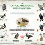 Birds-Kolkatabirds-com-s