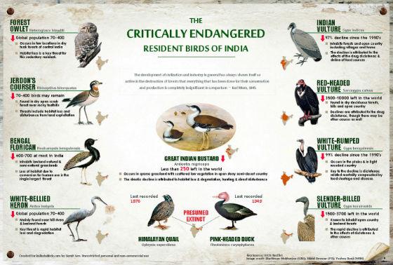 Birds of Kolkata (Photo courtesy: Kolkata Birds.com)