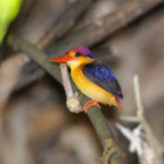 Birds-ofKerala-s