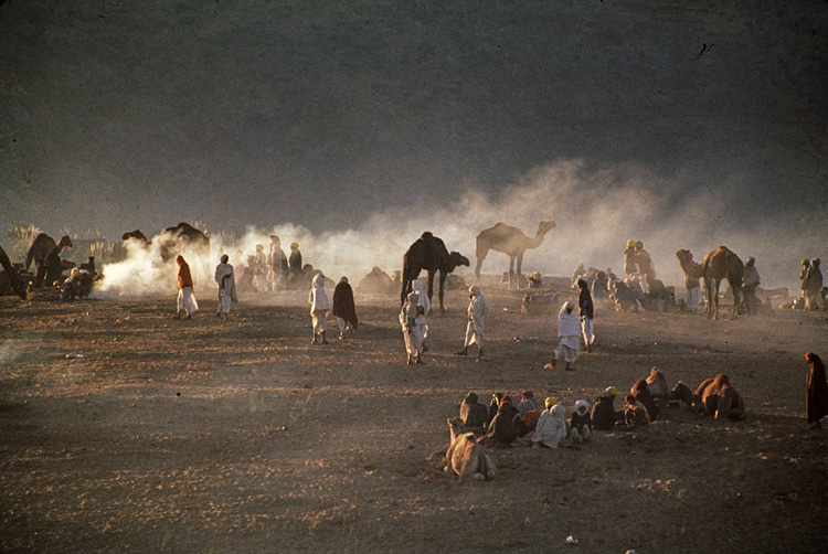 Sudhir Kasliwal's photograph Camel Country