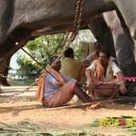 elephant-7