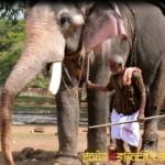 elephant-9
