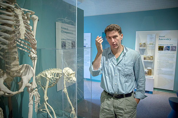 Joseph Henrich, Professor of Human Evolutionary Biology is the author of a recent study on how belief in an omniscient, punishing God helped people to cooperate and form larger societies. Here, he is seen with human and chimpanzee skeletons in the Evolution gallery at the Harvard Museum of Natural History. Kris Snibbe/Harvard Staff Photographer