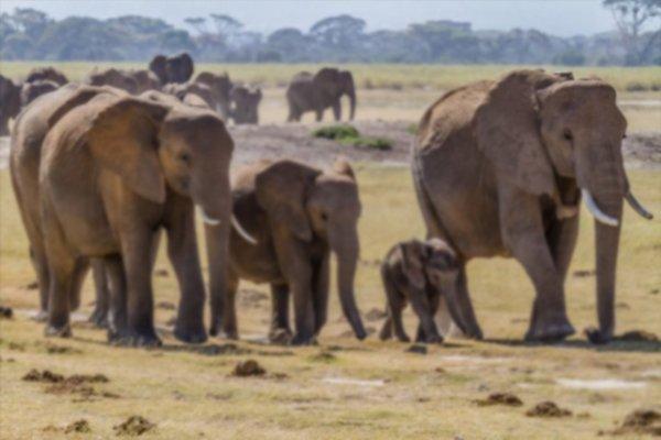 388 elephants died in Odisha in last six years.