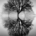 Reflections by Ansel Adams