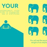 The Scale of Things-elephants