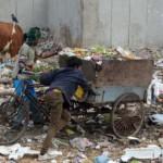 Garbage-cart-cow