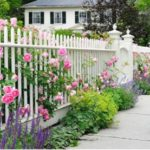 fence-roses