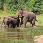 In a first, 2 B'luru Zoo elephants seen using tools to scratch targeted locations