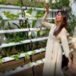 Shilpa Shetty plants