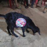 Stray Dog-Black