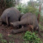 elephant-dead-2